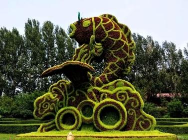 鱼跃龙门五色草造型